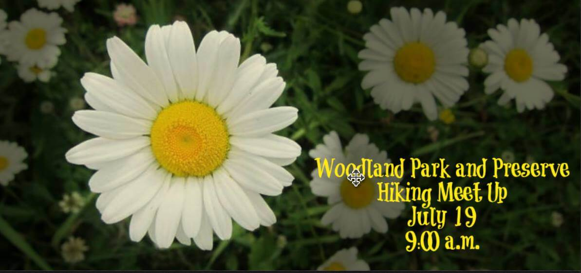 White daisies - Woodland Park & Preserve Hiking Meet Up, July 19th @ 9 A.M.